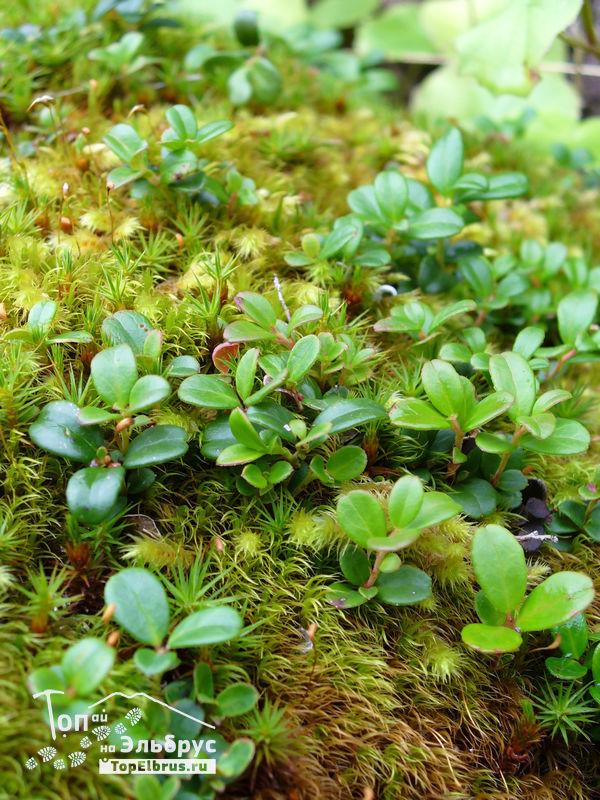 Природа Северного Приэльбрусья