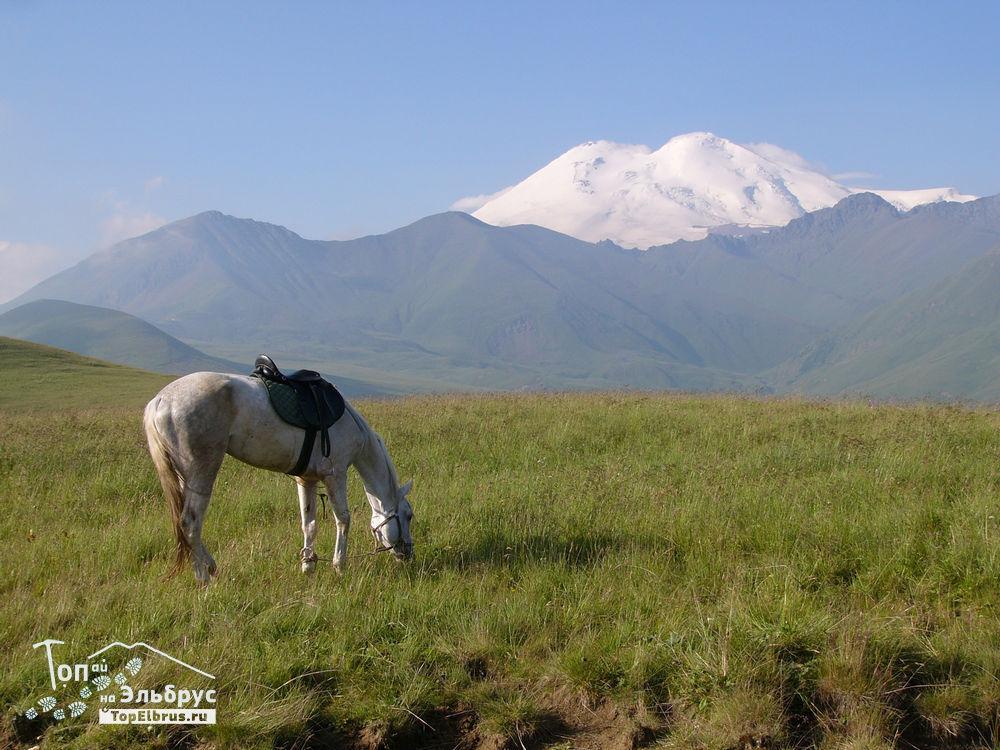 Вид на Эльбрус с поляны Тузлук