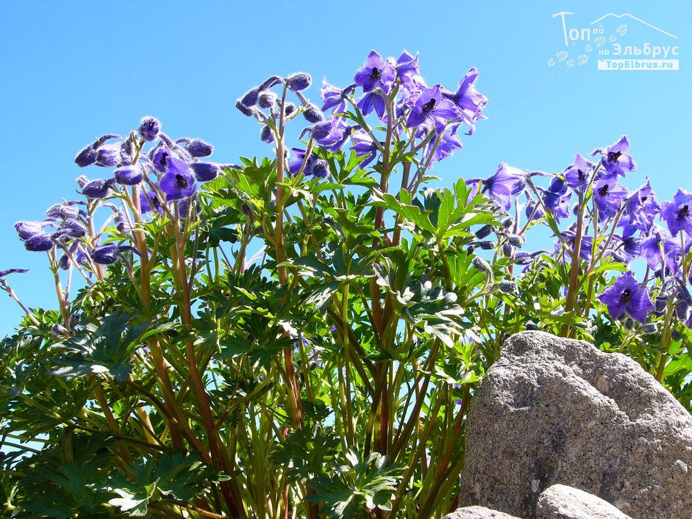 Цветы на высоте 3200 м