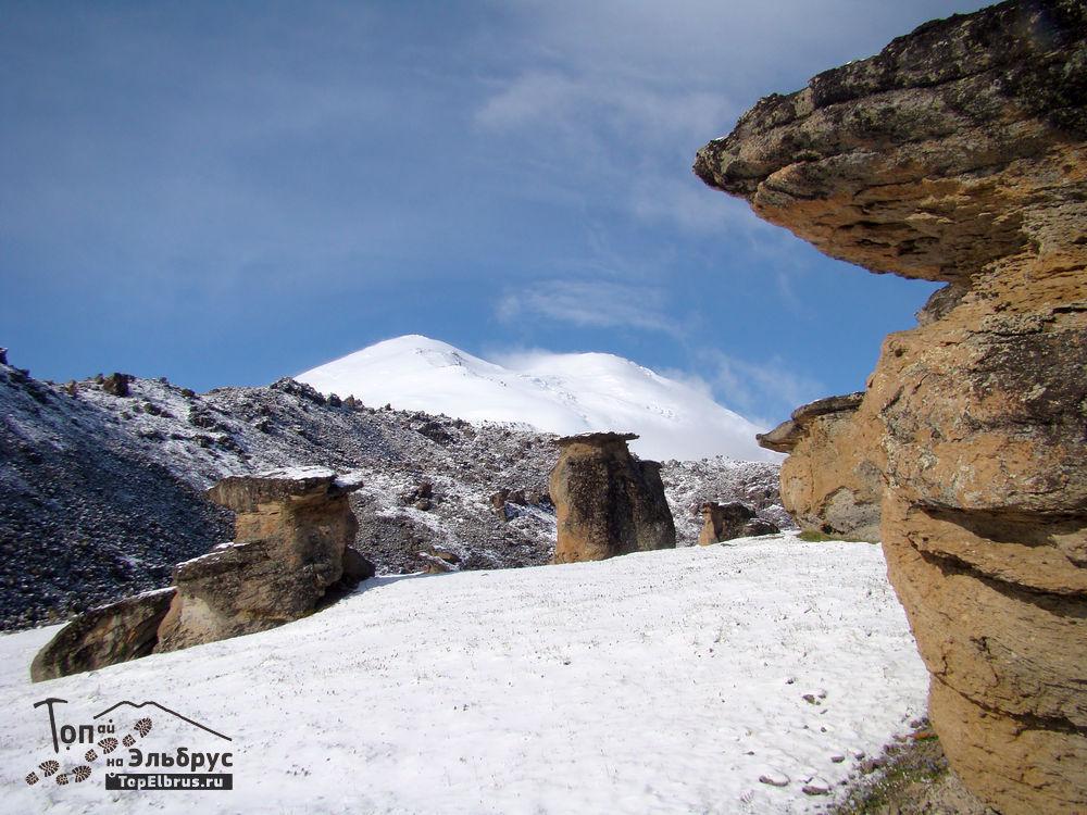 грибы на северном склоне Эльбруса